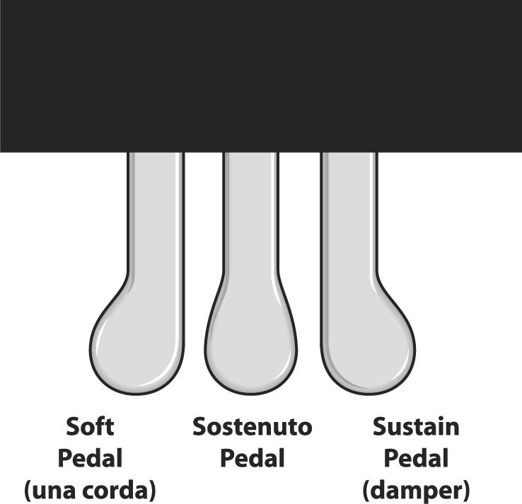 mo hinh pedals