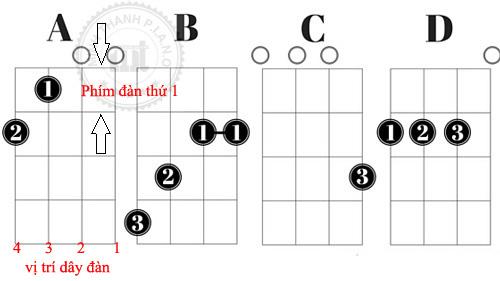cac-hop-am-dan-ukulele
